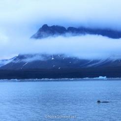 Nschweitzer_Svalbard