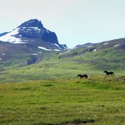 Chevaux du côté de Borgarfjörður eystri