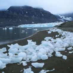 Une myriade de petits icebergs échoués sur la plage