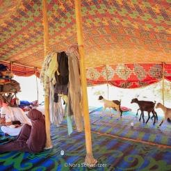 Femmes nomades sous la tente, quelque part entre Terjit et Mhaireth, Adrar