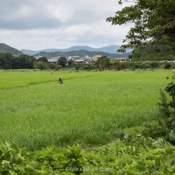 Japon Iles Goto © Nora Schweitzer